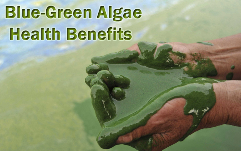 liquid blue green algae in hands