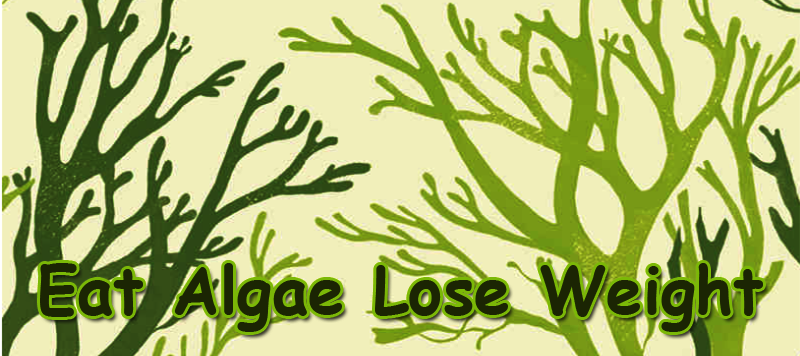 algae for weight loss