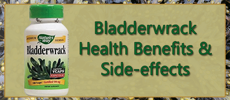 bladderwrack side effects