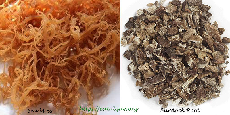 sea moss and burdock